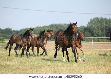 Group of horses with foal running on pasturage - stock photo
