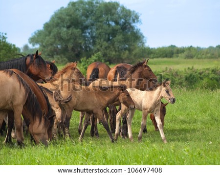 Group of  horses with young colts on green countryside meadow - stock photo