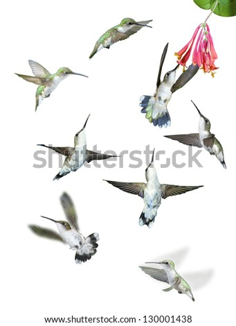 Group of hummingbirds isolated against white background. - stock photo