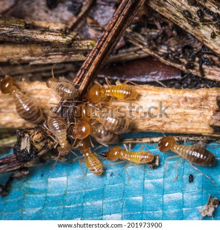 group of insect termite bugs - stock photo
