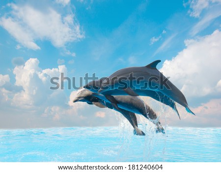 group of jumping dolphins,beautiful seascape with deep  ocean  waters and cloudscape - stock photo