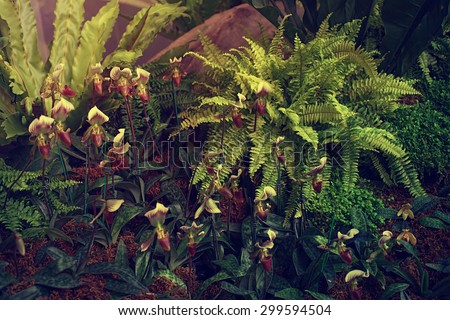 group of lady's slipper orchid flower in  vintage style - stock photo