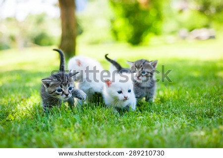 group of little kitten in a basket on the grass - stock photo