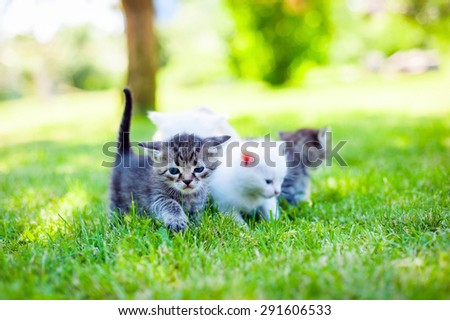 group of little kitten in a basket on the grass