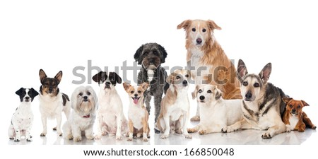 Group of mixed breed dogs - stock photo
