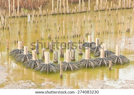 Group of mock-up mangrove tree model  in conservation site - stock photo