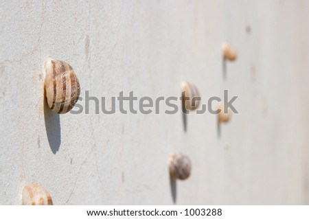 Group of molluscs on the wall - stock photo