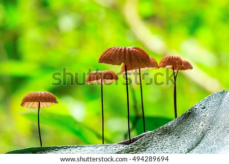 Group of mushroom in a forest on green background