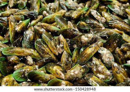 Group of New Zealand Green Lip Mussels on display in fishermen market. Close up - stock photo