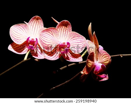 group of nice colorful purple orchids under natural lighting with romantic dark bokeh background