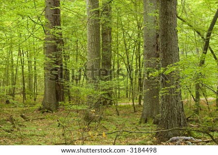 Group of old trees in autumnal forest