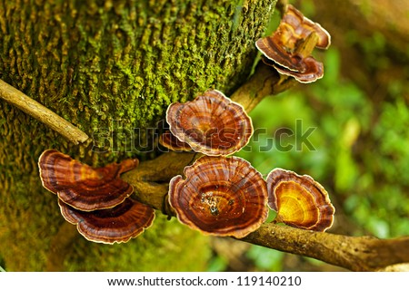 Group of orange red mushroom grow on moss log in rain forest