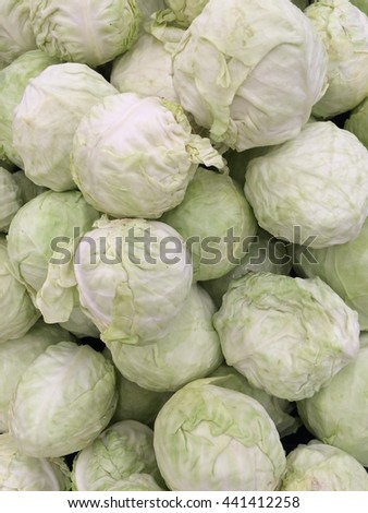 group of organic green cabbage in the market - stock photo