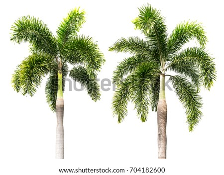 Group of palm tree isolated on white background