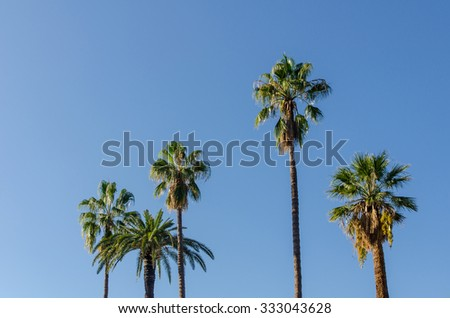 group of palm trees in front of a clear blue sky on a sunny day
