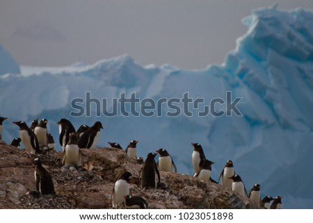 group of penguin in front of ice and glacier, Antarctica