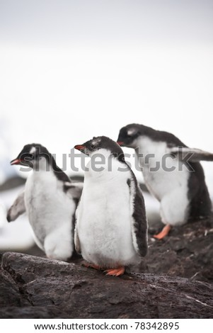 Group of penguins having fun standing on the rocks - stock photo