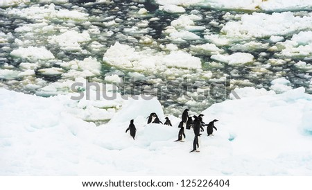 Group of penguins in Antarctica. Antarctic region of the Southern Hemisphere, almost entirely south of the Antarctic Circle, and is surrounded by the Southern Ocean. - stock photo