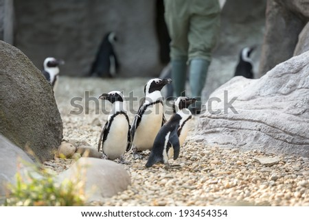 Group of penguins together in zoo