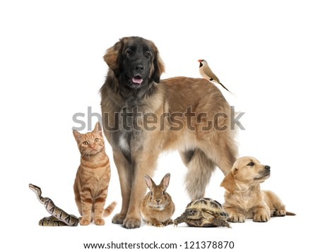 Group of pets - stock photo