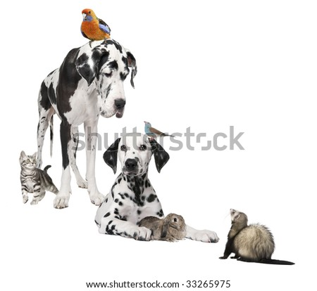 Group of pets : dog, bird, rabbit, cat, ferret in front of white background - stock photo