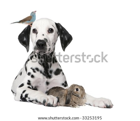 Group of pets : dog puppy, bird, rabbit in front of white background - stock photo
