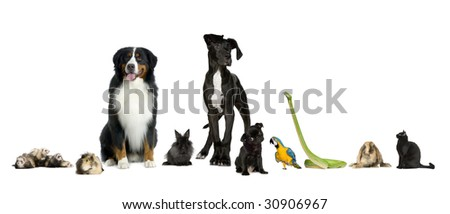 Group of pets in a raw - Dog, cat, bird, reptile, rabbit, ferret- in front of a white background