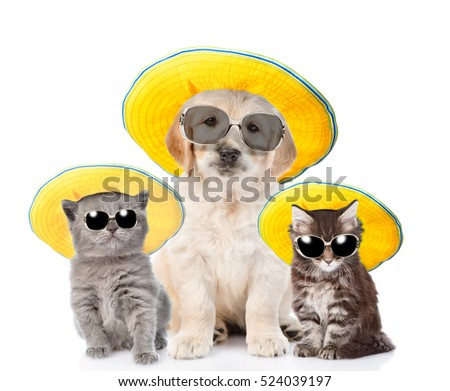 Group of pets in sunglasses and straw hats looking at camera. isolated on white background