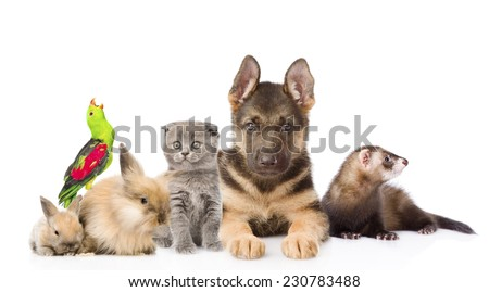 Group of pets. Isolated on white background - stock photo
