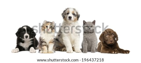 Group of pets: kitten and puppy on a raw - stock photo