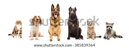 Group of pets sitting together isolated on white background
