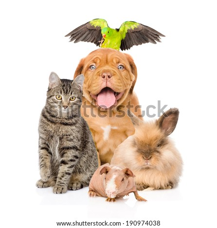 Group of pets together in front  - stock photo