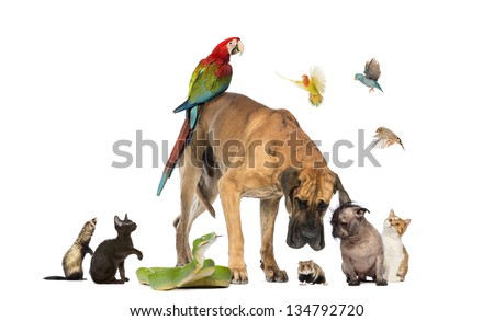 Group of pets together isolated on white - stock photo