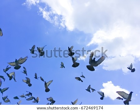 Group of pigeon flying on beautiful Sky.