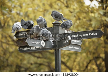 Group of pigeons sitting on a sign - stock photo