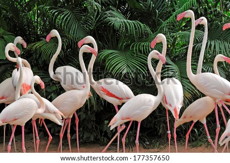 Group of pink flamingos - stock photo