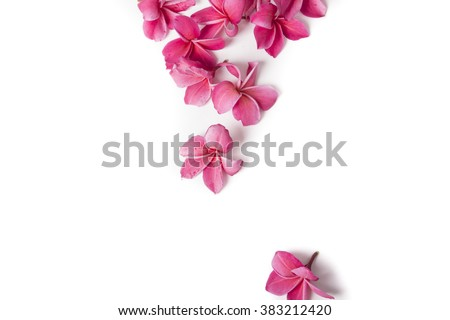 Frangipani Stock Photos Royalty Free Images Amp Vectors