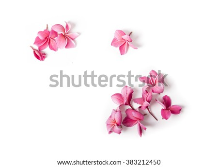 Group of Pink Frangipani isolated on White - stock photo