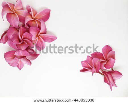 Group of Pink Frangipani isolated on White