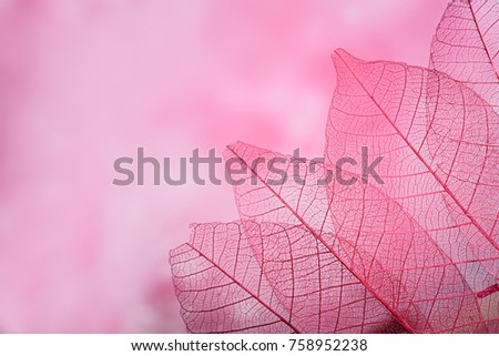 group of pink skeleton leaves on blured background, close up