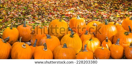 Group of pumpkins against colorful fall leaves, - stock photo