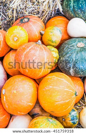 Group of Pumpkins, Thailand - stock photo