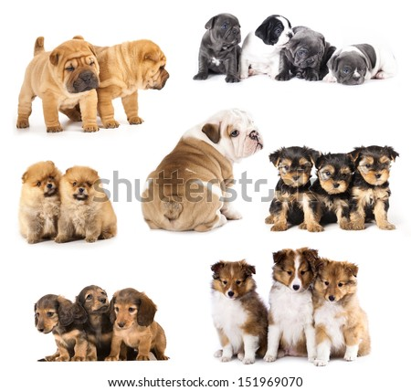 Group of Puppies  different breeds - stock photo