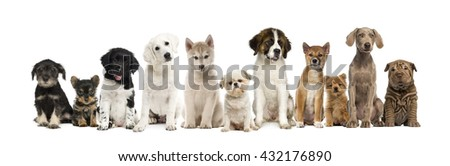 Group of puppies in a row, isolated on white - stock photo
