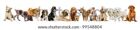 Group of puppies together  isolated on a white background - stock photo