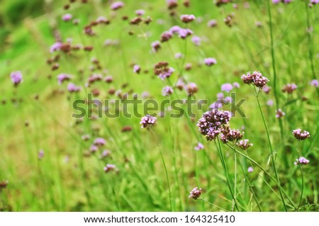 group of purple flower - stock photo