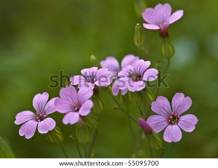Group of Purple Wildflowers With Green Background - stock photo