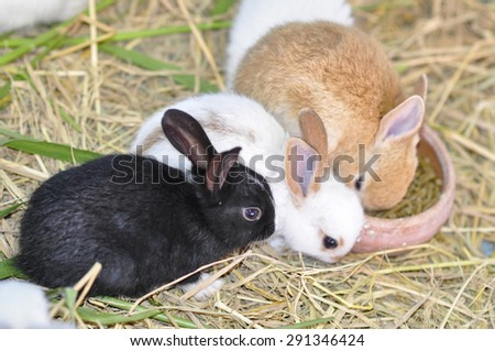 Group of rabbits eating food in the cage. - stock photo