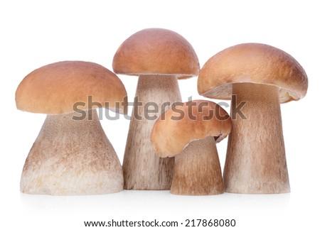 Group of raw boletus edulis isolated on white background - stock photo