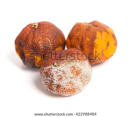 Group of rotten oranges isolated on white background - stock photo